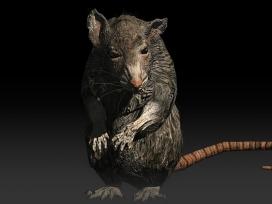 after-reset-rpg-rat-02